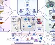 تطورات الطب التجديدي باستخدام الخلايا الجذعية