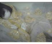 العروس النائمة